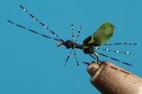 Black Space Ant