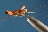 LA Ant