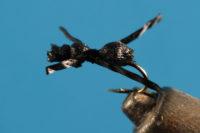 Mat Ant