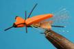 Sparkle Wing LA Ant