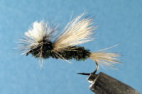 Mike's Peacock Fly