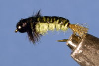 Uncased Caddis Nymph